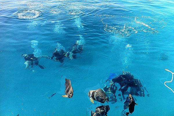 Ocean Free Cairns Sailing Trip