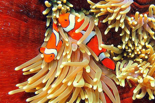 Personalised Cairns Great Barrier Reef Trip